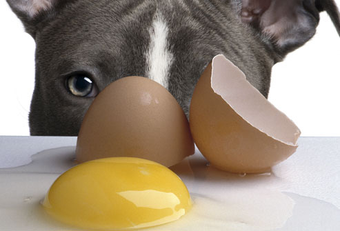 Food Your Dog Should Never Eat - Raw Eggs