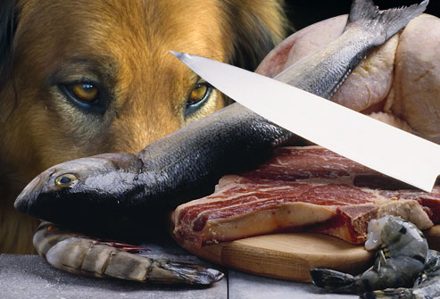 Food Your Dog Should Never Eat - Raw Meet and Fish