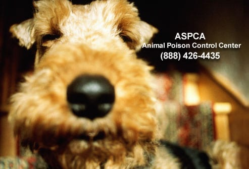 Food Your Dog Should Never Eat - ASPCA Animal Poison Control Center