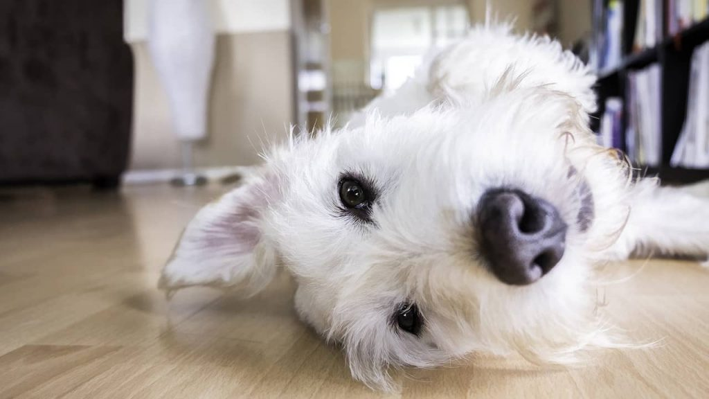 Dog Behaviors - What are the Benefits of Yogurt for your Dog?