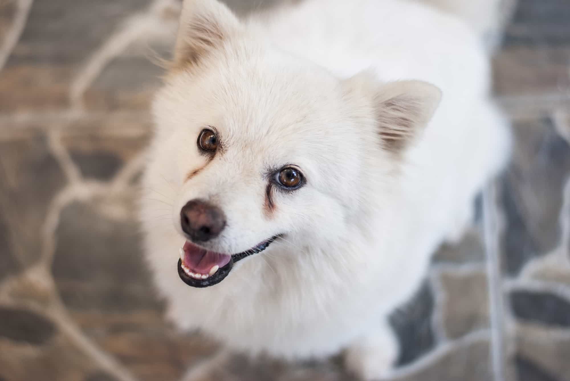 Dry Dog Food For Senior Dogs With Bad Teeth