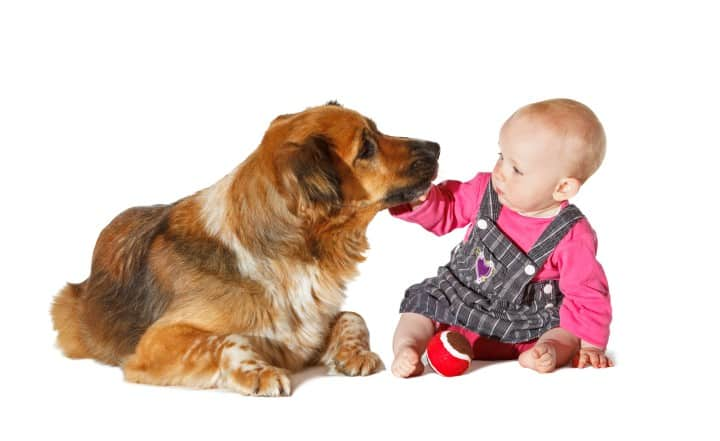 dog-behaviors-with-babies