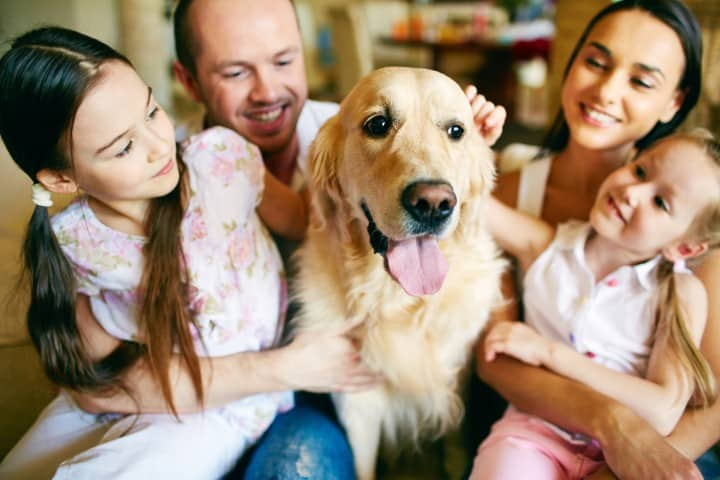 well-behaved-dogs-for-families
