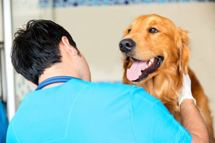 dog-behaviors-after-deworming