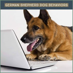 Dog Behaviors of German Sheperd Dogs