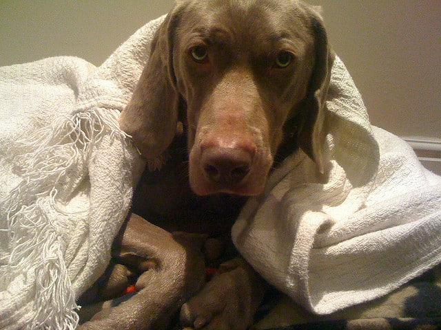 Low temperature, is good for dogs?