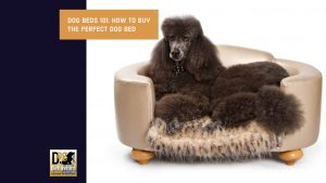How to buy the Perfect Dog Bed