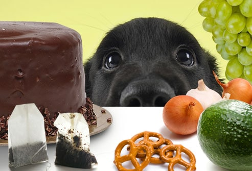 Food Your Dog Should Never Eat
