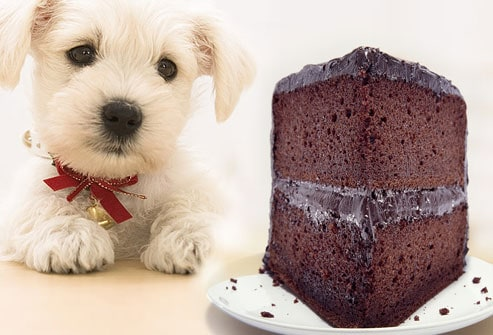 Food Your Dog Should Never Eat - Chocolate
