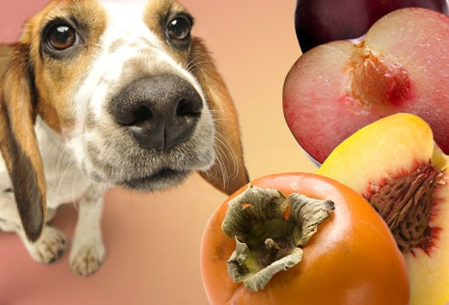 Food Your Dog Should Never Eat - Persimmons, Peaches and Plums