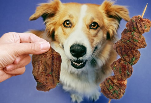 Human Food Your Dog Can Eat - Lean Meats | Dogbehaviors.net