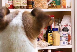 Dangerous Food for Dogs - Kitchen Pantry : Not dogs Allowed