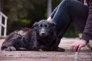 Dog Behaviors - Dogs During Hurricanes