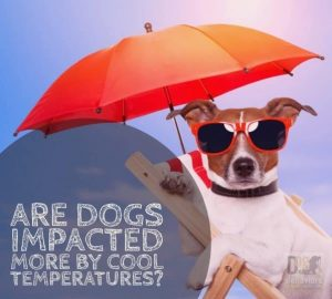 Dogs and Cool Temperatures