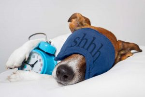 Dog Sleep Disorders