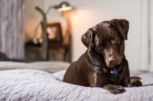 Dog beds 101: Everything you need to know