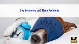 Dogs and Sleep Disorders