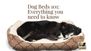 Dog beds: What you need to know