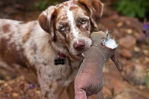 Essential Tips for Training Your Hunting Puppy