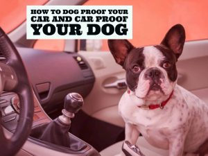 Car proof your dog