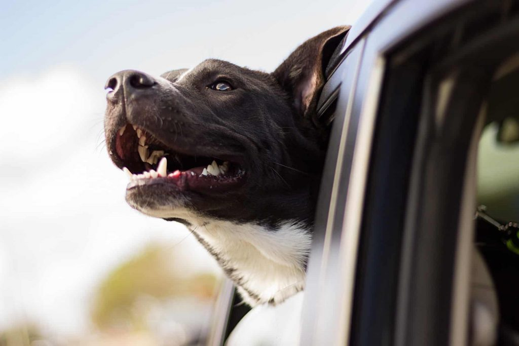 Car proof your dog, dog proof your car