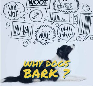 Why Dogs Bark excessively
