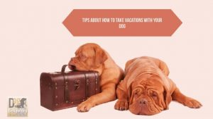 Tips to take Vacations With Your Dog