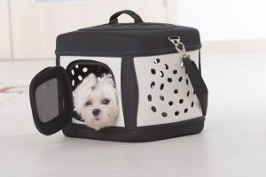 Tips about dog carrier training