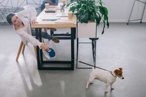 Bring your dog in a work day to stay healtier