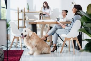 Benefits of Investing in an Office Dog