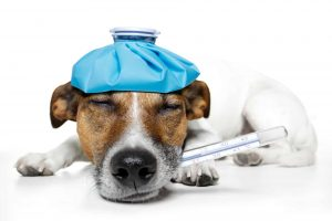 Most common disease on dogs