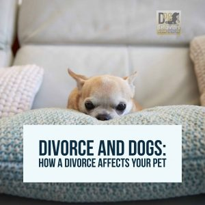 How a Divorce Affects Your Pet
