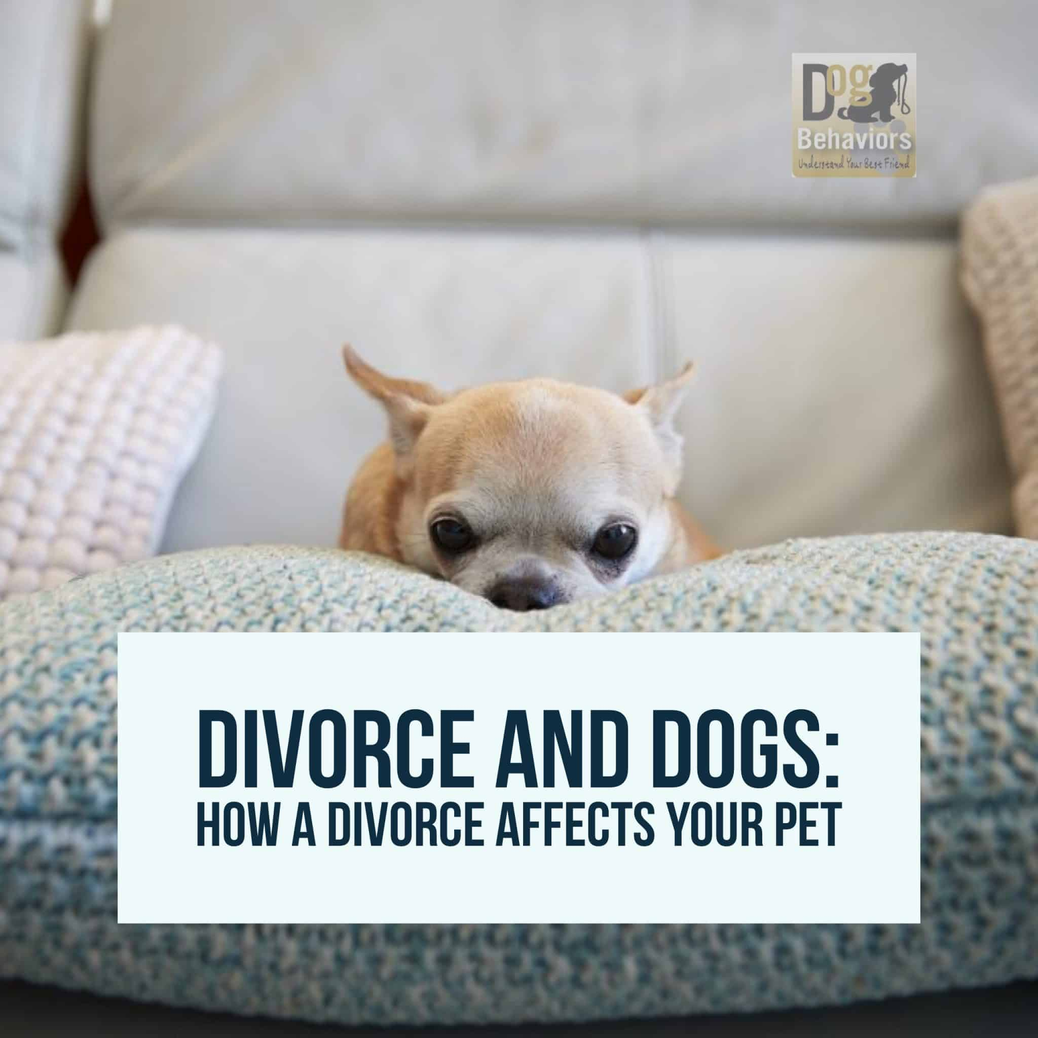 Divorce And Dogs How A Divorce Affects Your Pet