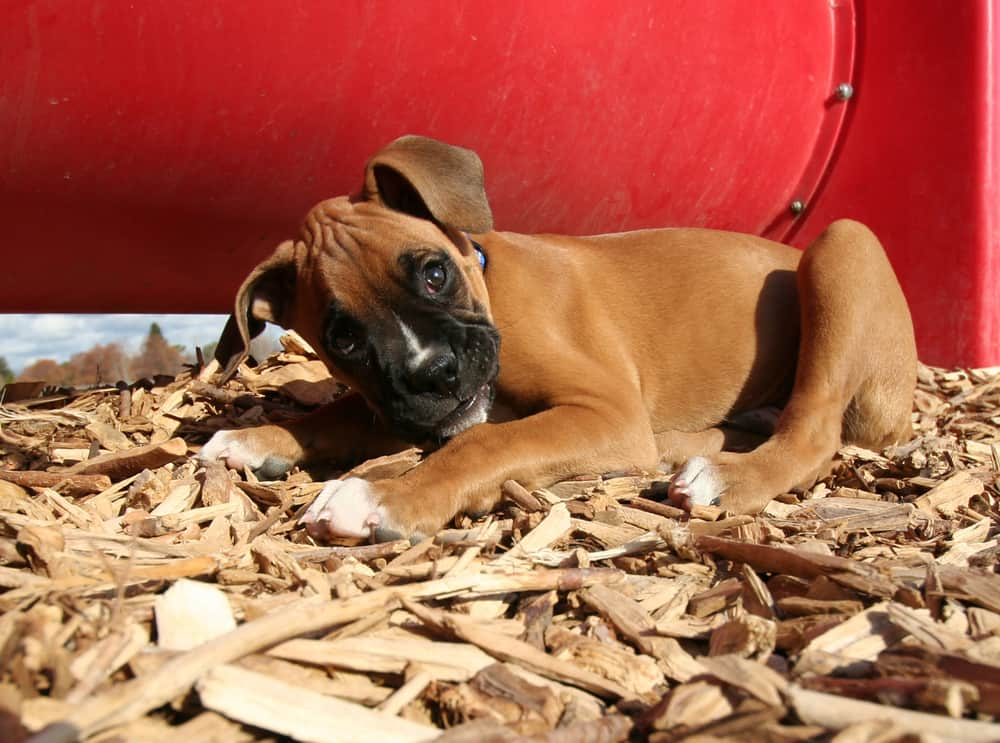 Use the right mulch for your dog backyard