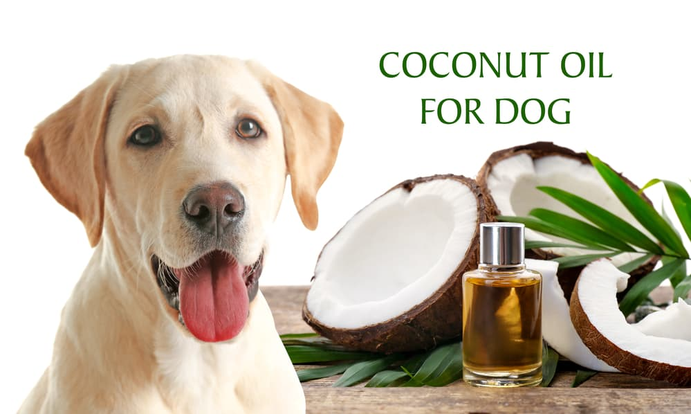 Coconut Oil For Dog