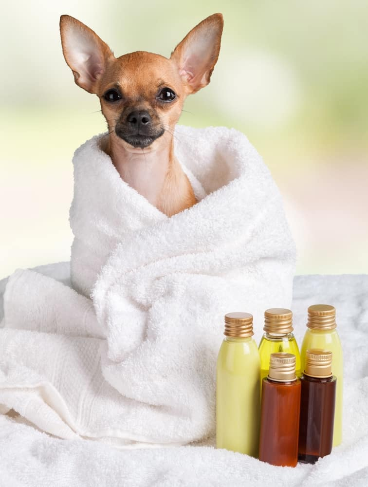 Dog and Fatty Oil benefits