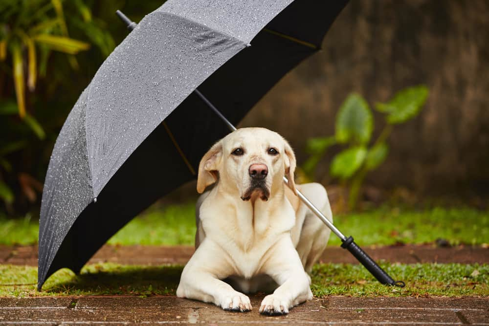 Dog looking for Shade and Shelter