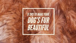 9 Tips to Make your Dog's Coat Beautiful