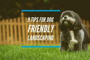 Tips For Dog Friendly Landscaping