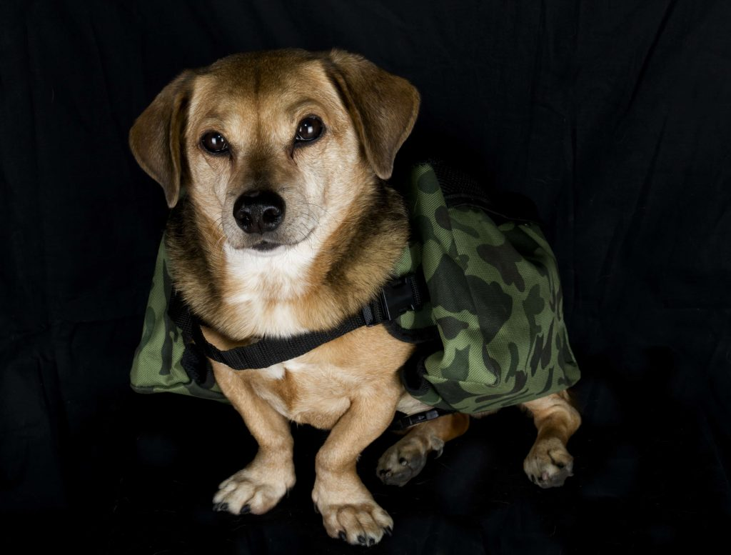 Military dogs ready for adoption