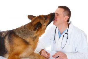 Dog and a Veterinarian