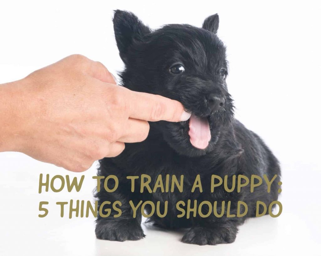 5 things to do to train a puppy