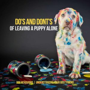 Do's and Don'ts of leaving a dog alone