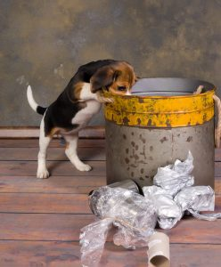 Dog Playing with the trash can