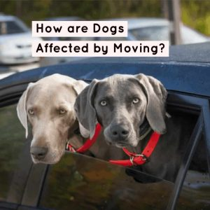 Dogs affected after moving